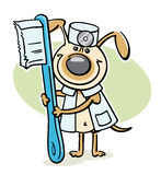 Dog veterinarian with toothbrush Royalty Free Stock Image