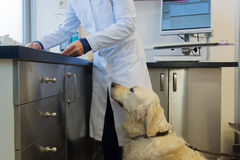 Dog at the Veterinarian Stock Photos