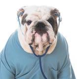 Dog veterinary care Royalty Free Stock Photography