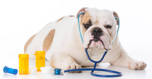 Dog veterinary care Royalty Free Stock Images