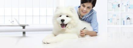 Dog veterinary examination smiling Veterinarian with stethoscope royalty free stock photography