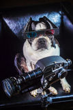 Dog Videographer Royalty Free Stock Photography