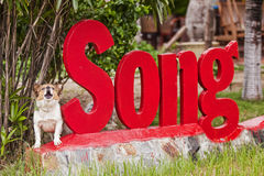 Dog from Vietnam. Dog sings his song from Vietnam Stock Images