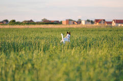 Dog and village. Dog running on green grass with village on background Stock Photos