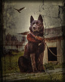 The dog in the village sits tied to a chain. Photos in the grunge style Stock Photo