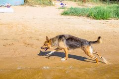The dog on the river stock photography