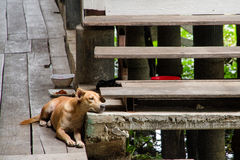 Dog wait owners  to go home Royalty Free Stock Image