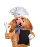 Dog waiter Royalty Free Stock Photos