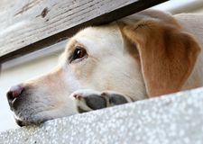 Dog Waiting Stock Photos