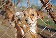 Dog waiting for adoption. Waiting on his new owner Stock Photos