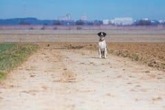 Dog waiting Royalty Free Stock Photo