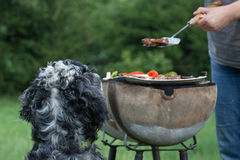 Dog waiting for the barbecue, waiting for lunch Royalty Free Stock Photos