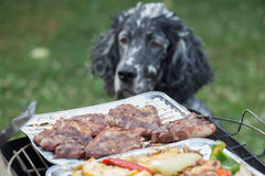 Dog waiting for the barbecue, waiting for lunch Stock Photo