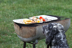 dog waiting for the barbecue, waiting for lunch Royalty Free Stock Photo