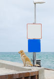 Dog waiting on the beach. Stock Image