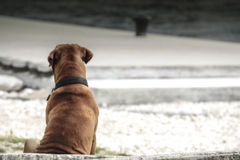 Dog waiting Stock Images