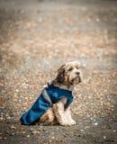Dog waiting on beach Royalty Free Stock Photos