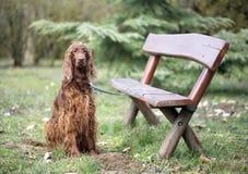 Dog waiting Stock Photos