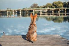 Dog waiting dock Stock Photo