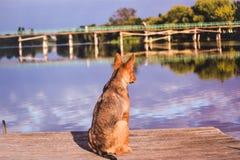 Dog waiting dock Stock Photos
