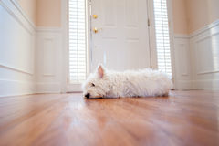 Dog waiting at the door Stock Photography