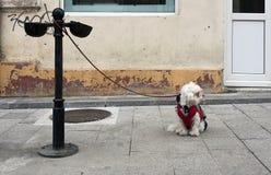 Dog waiting Stock Photo