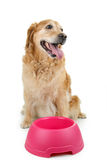 Dog waiting food Royalty Free Stock Photography