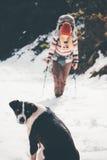 Dog waiting friend hiking Travel together Royalty Free Stock Image