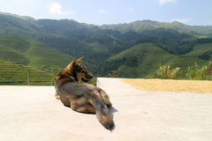 A dog waiting Royalty Free Stock Image