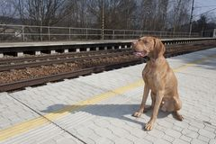 Dog waiting for his master to rural station, spring day Stock Photography