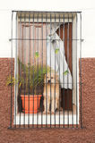 Dog waiting for his master at the window Stock Image