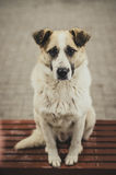Dog waiting for a host. Dog sitting on the street bench and waiting for a host Stock Images