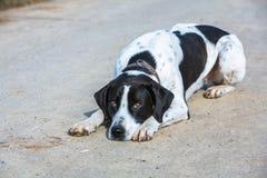 Dog waiting Stock Images