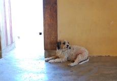 Dog waiting Royalty Free Stock Images