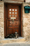 Dog waiting the master. On the house' threshold stock images