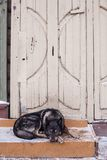 Dog waiting for the owner Royalty Free Stock Photography