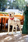 Dog waiting the owner outdoors Stock Image