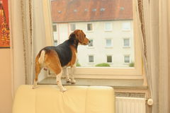 Dog is waiting Stock Images