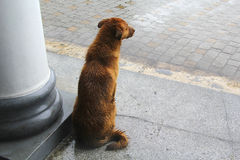 DOG WAITING FOR THE RAIN TO STOP royalty free stock image