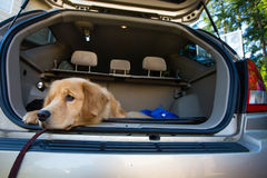 Dog waiting for a road trip Royalty Free Stock Photos