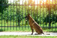 The dog is waiting for someone. The day is really warm and sunny Stock Image