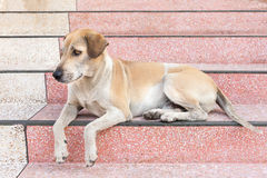 The Dog waiting for someone at home.  stock photography