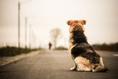 Dog waiting in the street stock photo