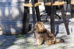 Dog waiting on the street Stock Images