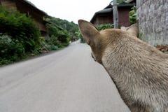 Dog waiting on street Royalty Free Stock Photo