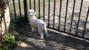 Dog Waiting stock footage
