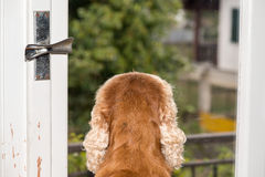Dog waiting at the window Royalty Free Stock Photo