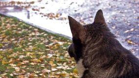 Dog waits the end of autumn rain stock video footage