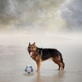 Dog Waits for His Friend to Play Football. With Him Stock Photo