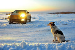 The dog waits on a road. Royalty Free Stock Photography